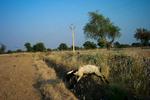 Rajasthan-series-09