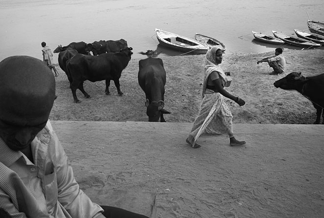 Varanasi_cows_and_people_8