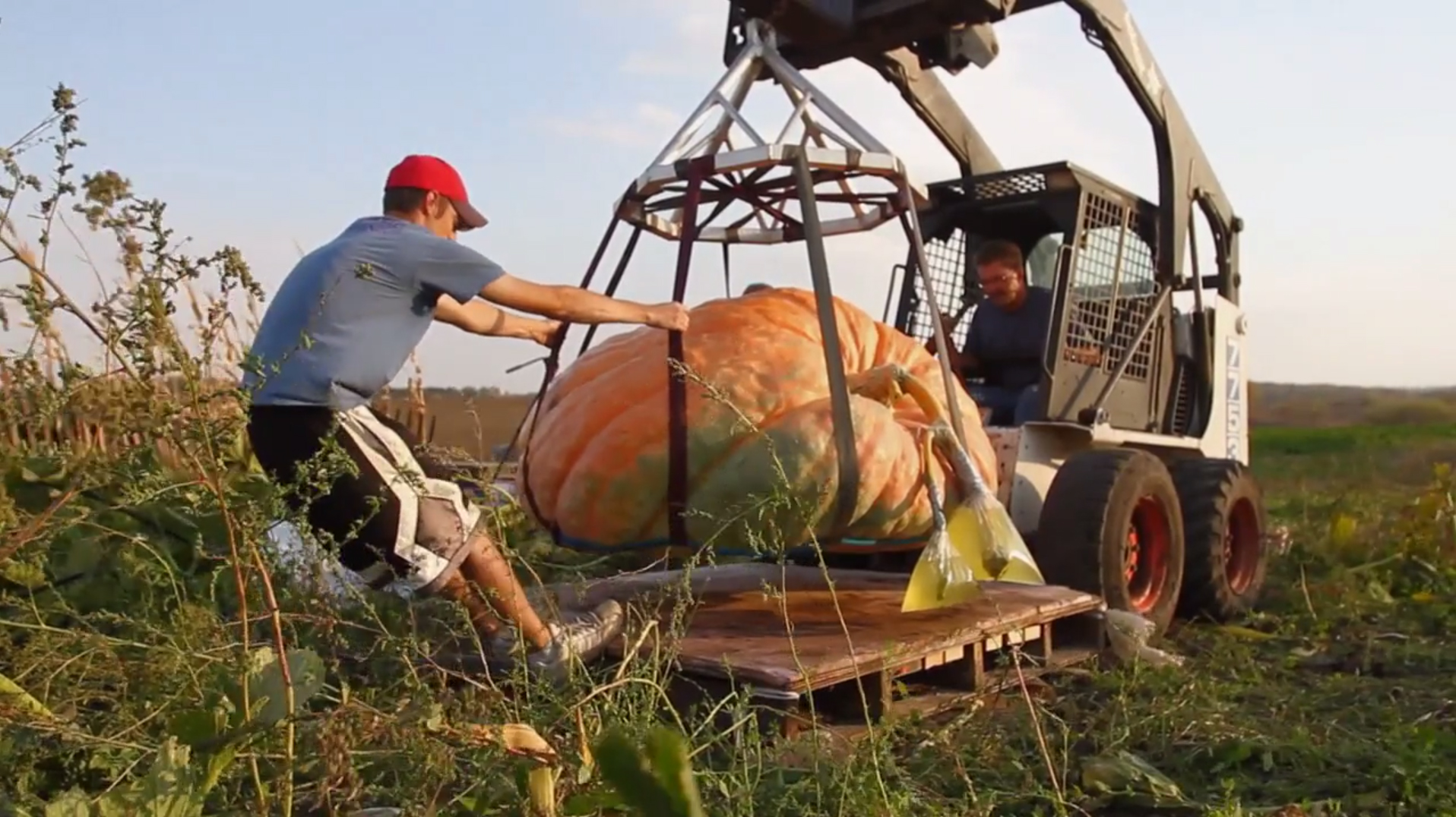 Chad Revier of New London, Minn. has been growing pumpkins competitively for four years. He is the current state record holder, and says he is motivated by the pursuit of breaking his personal best weight every year.