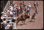 002_-rodeo
