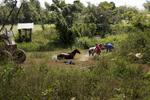 c-Sarah_Hoskins_-cuba_horses