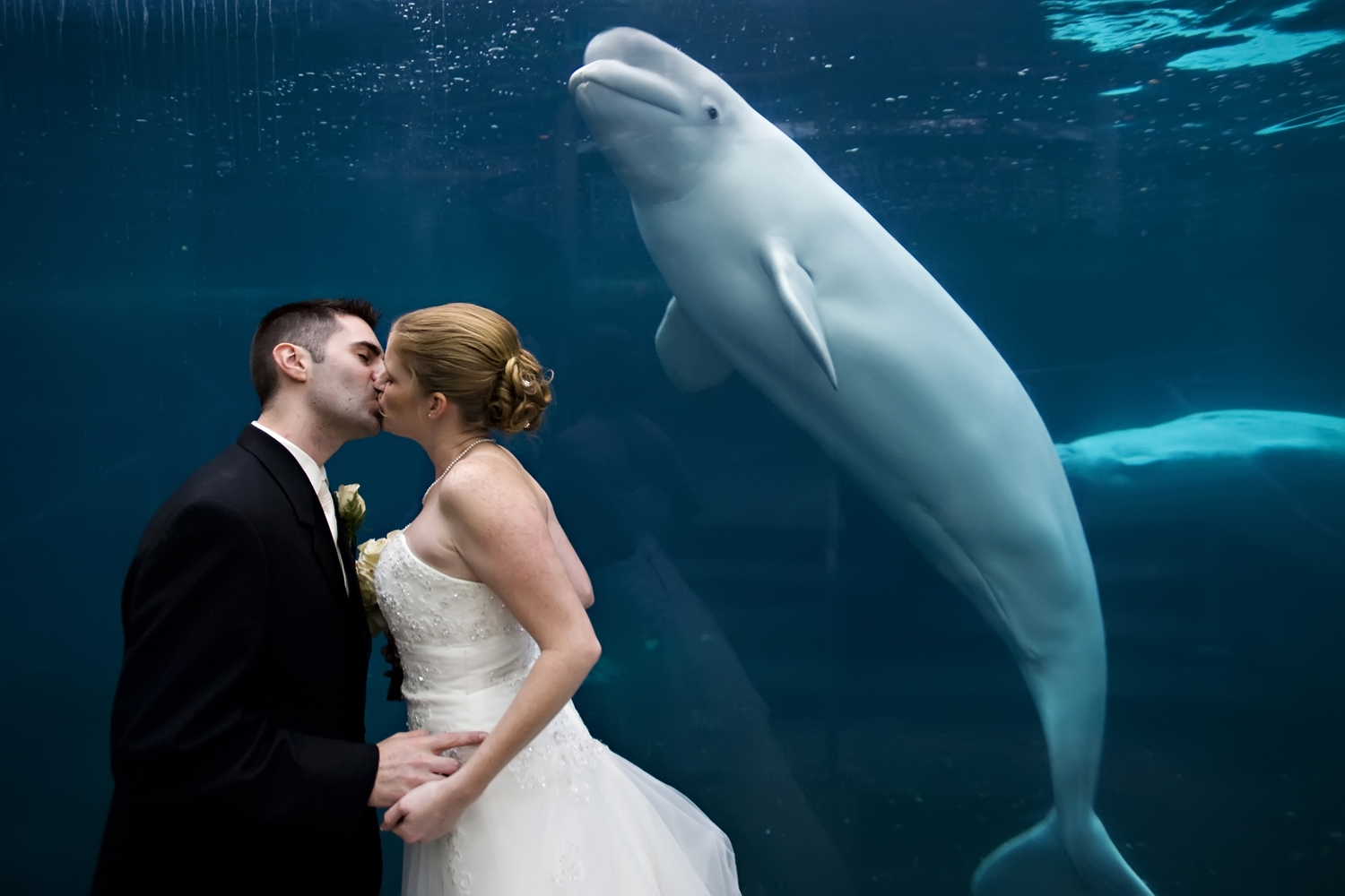 Bride and groom kissing as a beluga whale swims by at the Mystic Aquarium on their wedding day. CT wedding photographer