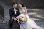 Portrait of bride and groom and their dog on wedding day in NYC