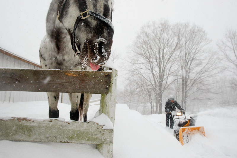 Selah Smart of Boxboro, Massachusetts, struggled to plow a path to the barn that houses his two horses, Wallapooluza, (at left) and Sara Sioux, a Shetland Pony.