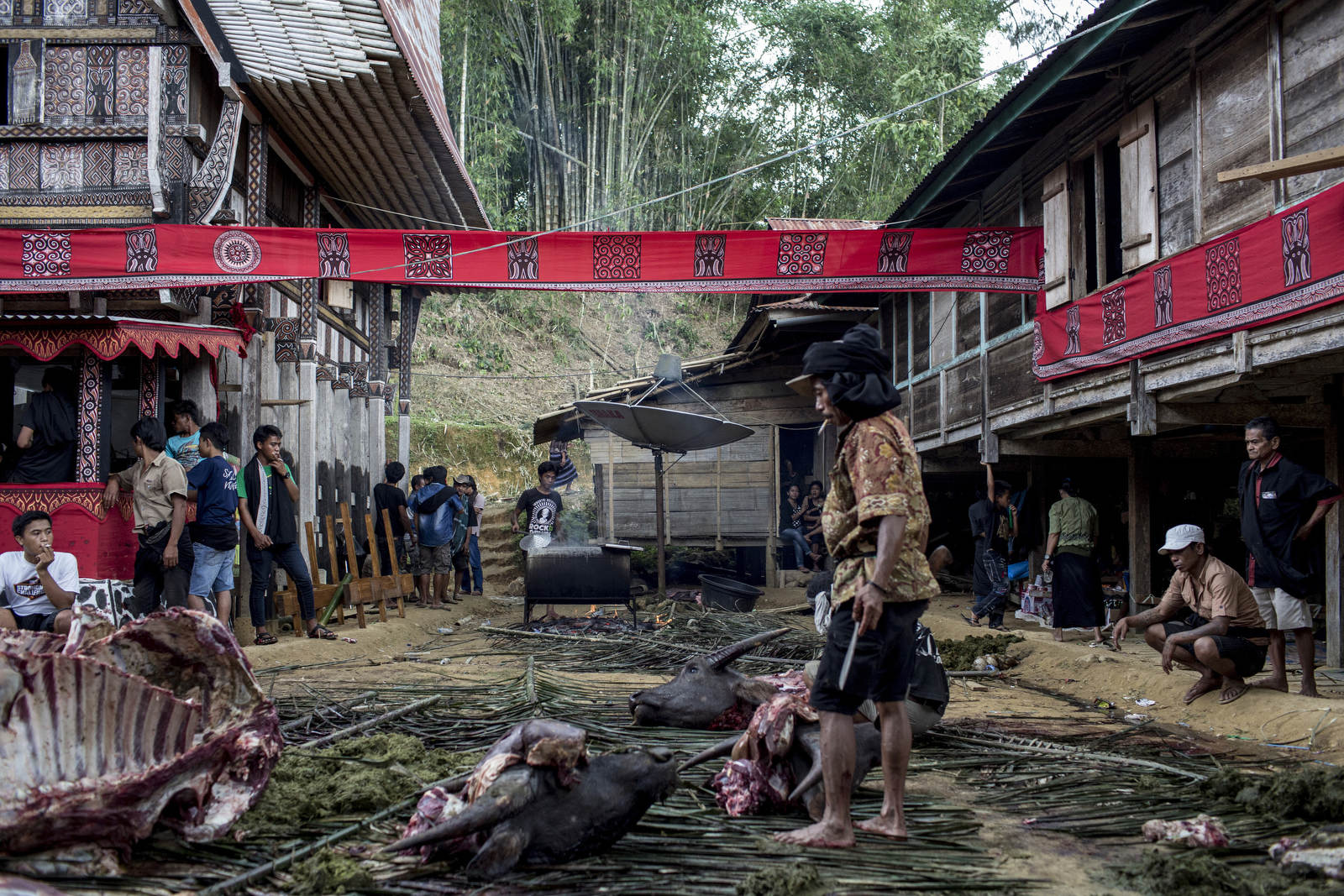 Funerals in Toraja, a remote corner of Sulawesi in eastern Indonesia, often involve many animal sacrifices. Water buffalo are sacrificed to help carry the deceased to the afterlife, and pigs are slaughtered to feed the funeral guests.