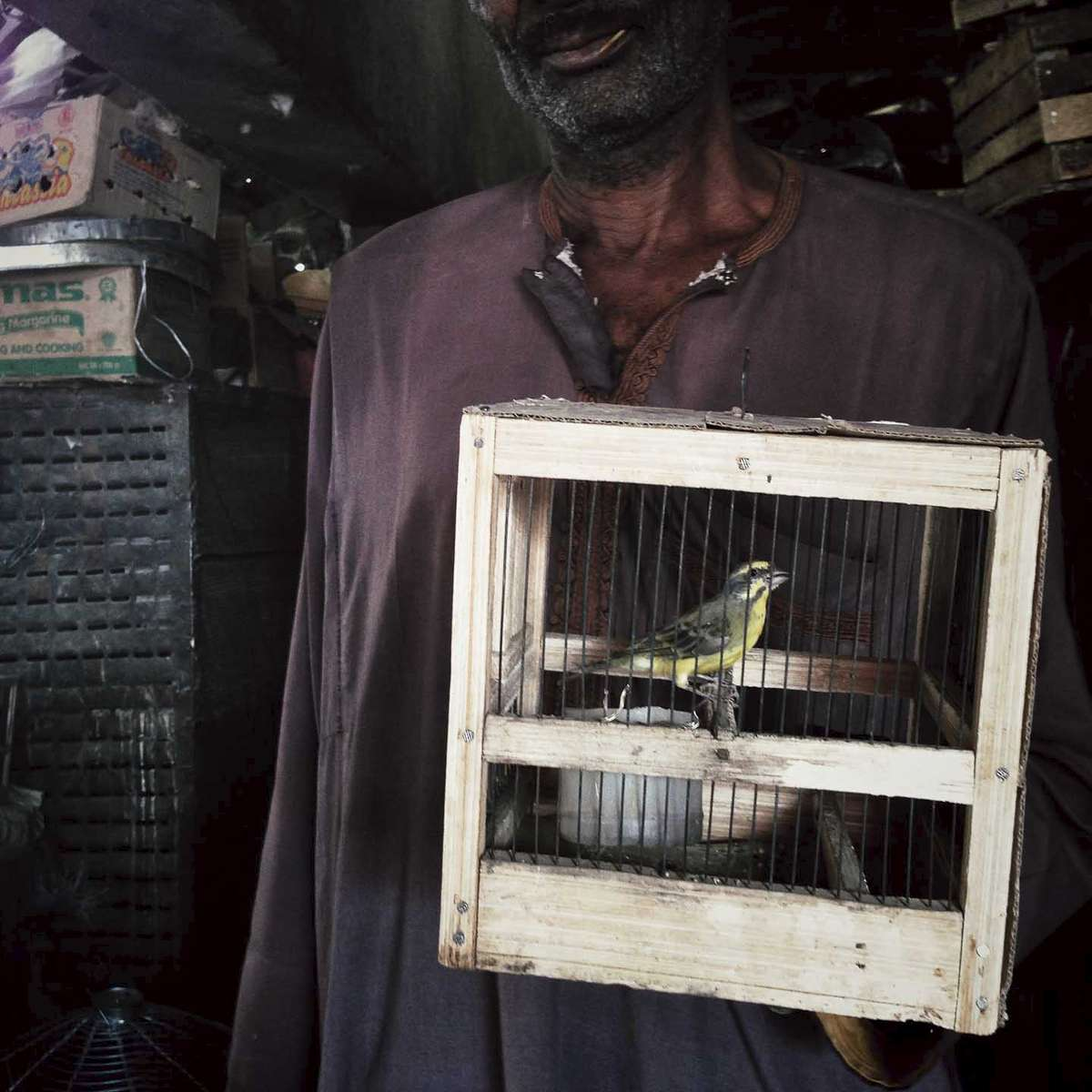 Bird in a cage at a market in Kano, Northern Nigeria. March 2014.