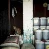 Cat on a ledge. Monrovia, Liberia. January 2013.