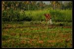 Haiti_2008-158