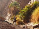 A Bedouin horseman rides through a narrow wadi at dawn above Dahab, Egypt. A place of warfare for millenia, the Sinai Peninsula is reinventing itself as a destination for tourists. (Simon Akam)