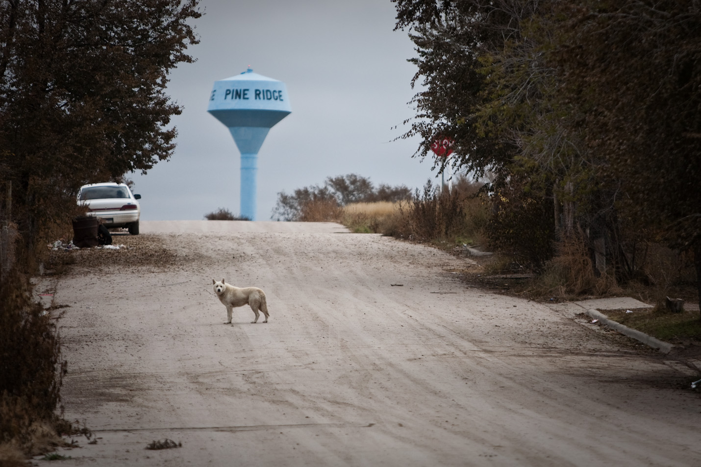 Dogs walk the streets of Pine Ridge, South Dakota on the Pine Ridge Indian Reservation during a cold morning on Thursday, October 22, 2009.  Many children carry bats or sticks to ward them off.