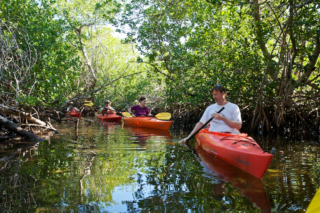 Andrew Clarke, right, leads a group of kayakers through mangrove trees near Big Pine Key, FL.