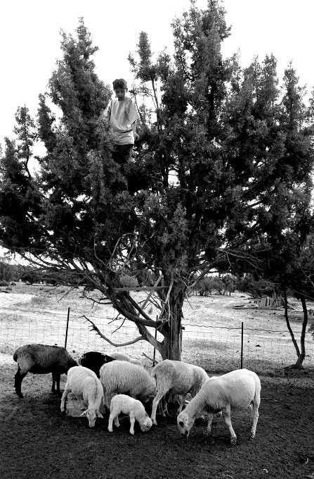 Shawn, dropping juniper berries to the lambs