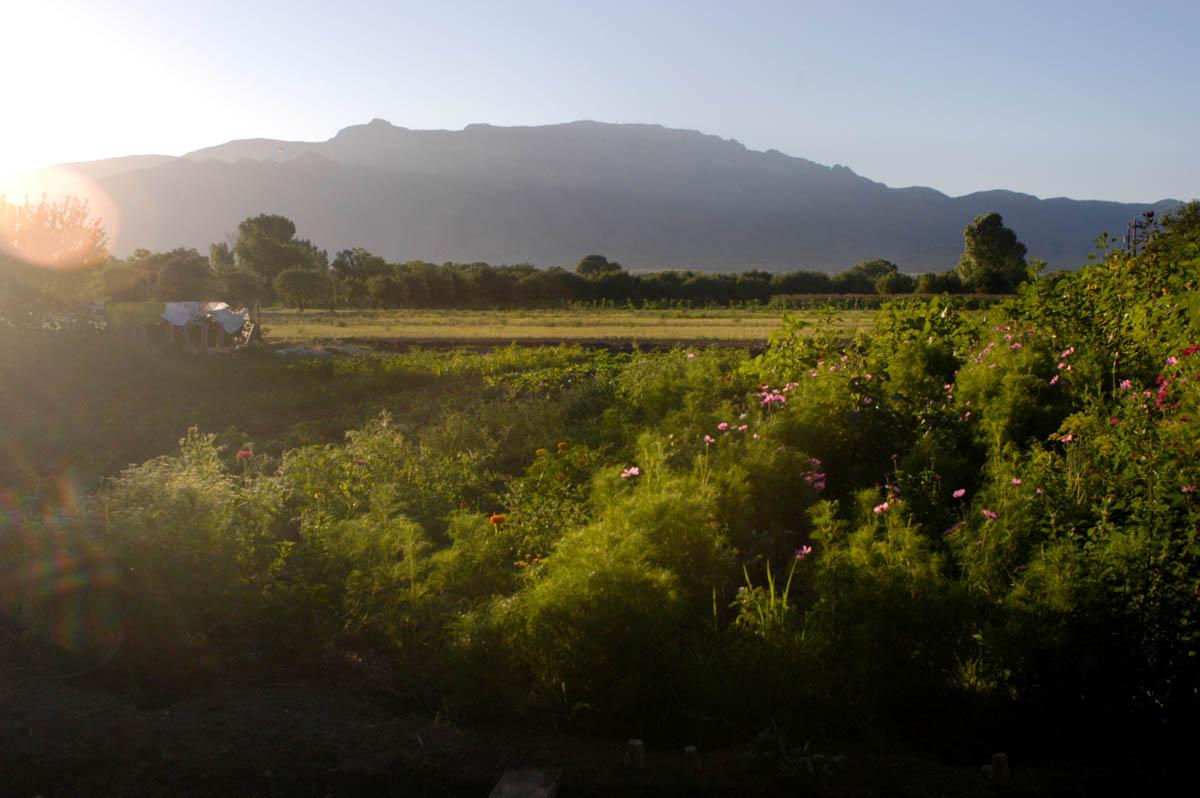 sunrise, gardens