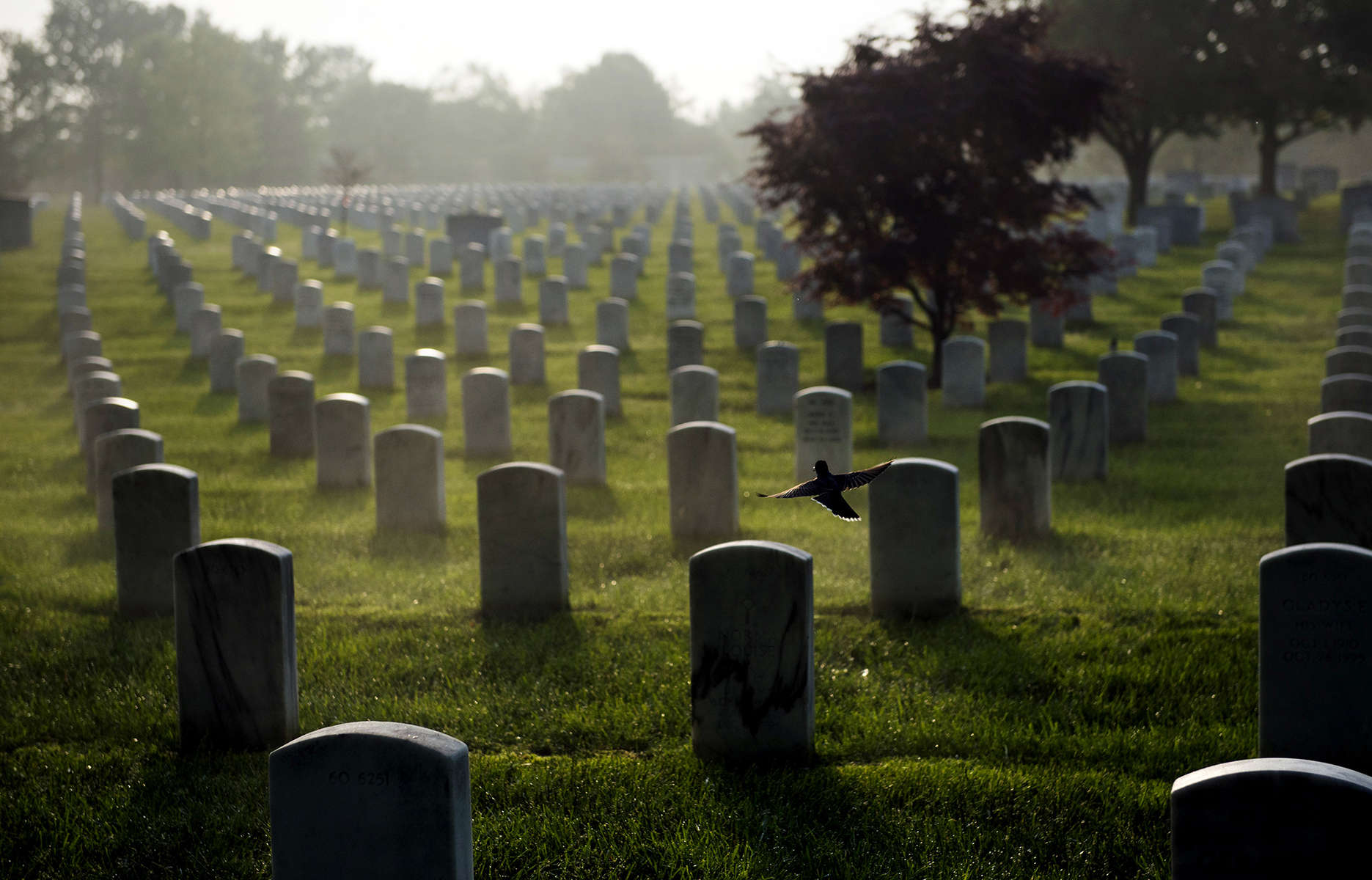 ARLINGTON, VA - MAY 22:  A bird takes flight as the sun rises over Arlington National Cemetery in section 60 on Thursday, May 22, 2014 in Arlington, VA. Hundreds of Iraq and Afghanistan war dead are buried in the section. (Photo by Amanda Voisard/For the Washington Post)