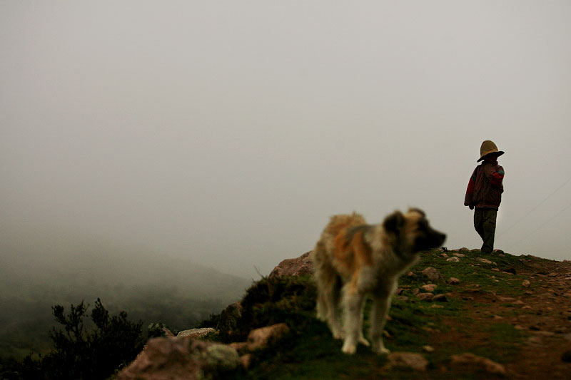 A young sheep herder lingers behind in the Andes mountains of Peru.