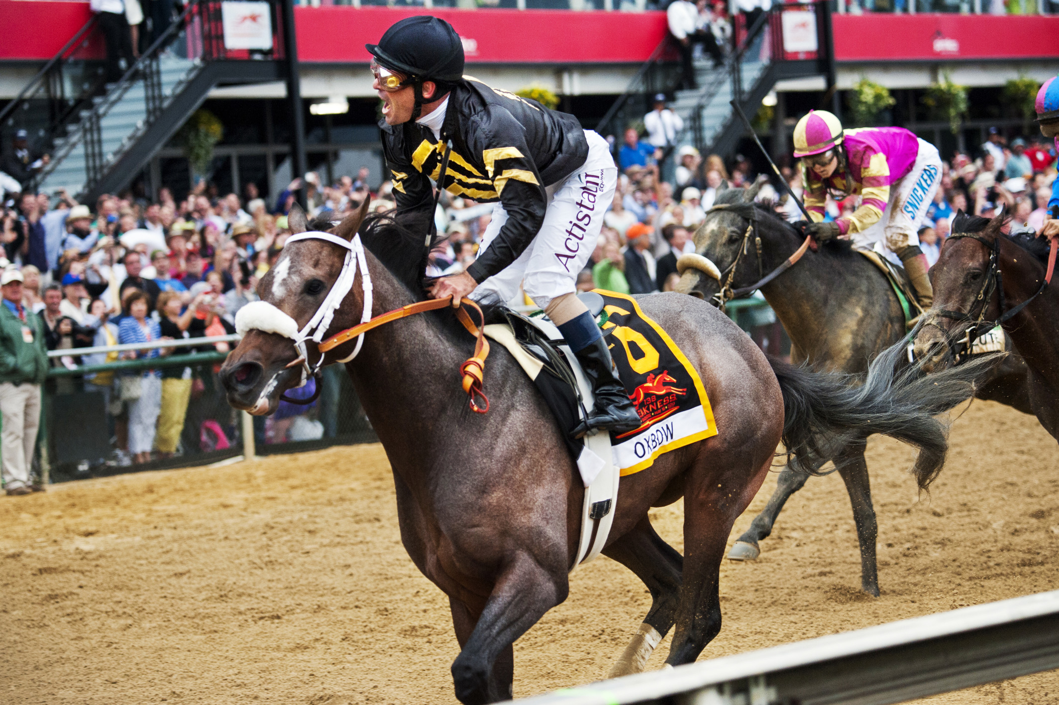 Oxbow, ridden by Gary Stevens wins the 138th running of the Preakness Stakes on Saturday May 18, 2013. (Amadna Voisard for NBC Sports)