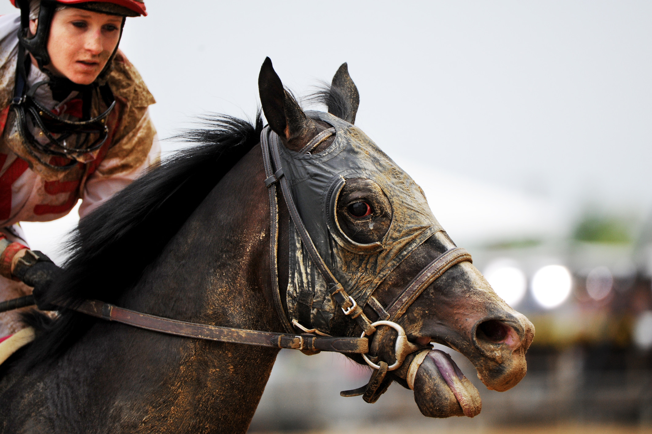 Rosie Napravnik atop Mylute returns to the paddock at Pimlico following the Preakness stakes on May 18, 2013  (Amanda Voisard for NBC Sports)