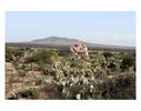 Arquitectura Libre / Free Architecture on the road from Zacatecas to Queretaro, Mexico