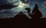 _giza_camel