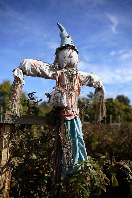 A scarecrow graces the garden of a farm in the Santa Ynez Valley of California. To purchase this image, please go to my stock agency click here.
