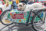 bulldog_bike_sidecar-0254