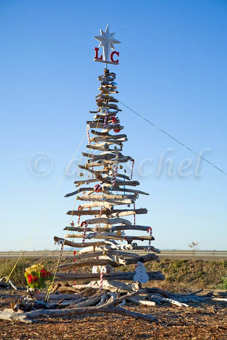 A Christmas tree made from driftwood is on display in the small beachside community of La Conchita between Santa Barbara and Ventura California on highway 101. To purchase this image, please go to my stock agency click here.