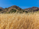 Dry Grass & Mountains, Santa Cruz Island, California.