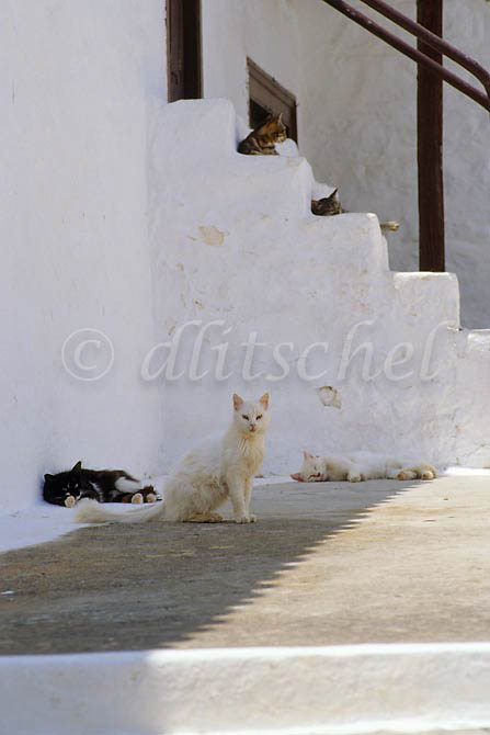 Five cats rest in the shade, in various postions of repose, on the Greek island of Hydra, one of the Saronic Islands, located in the Aegean Sea between the Saronic Gulf and the Argolic Gulf. To purchase this image, please go to my stock agency click here.