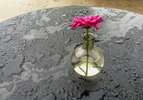 Single magenta colored flower in glass vase on wet table during rain in Santa Barbara at C'est Cheese restaurant.