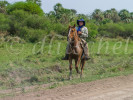 A cowboy rides his horse over the pastures of the Chaco region of northern Paraguay.