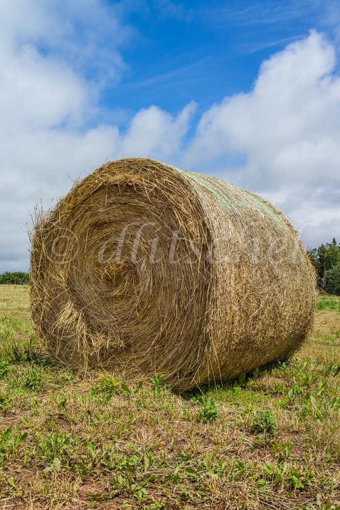 Large roll of baled hay in a field on Prince Edward Island, Canada.