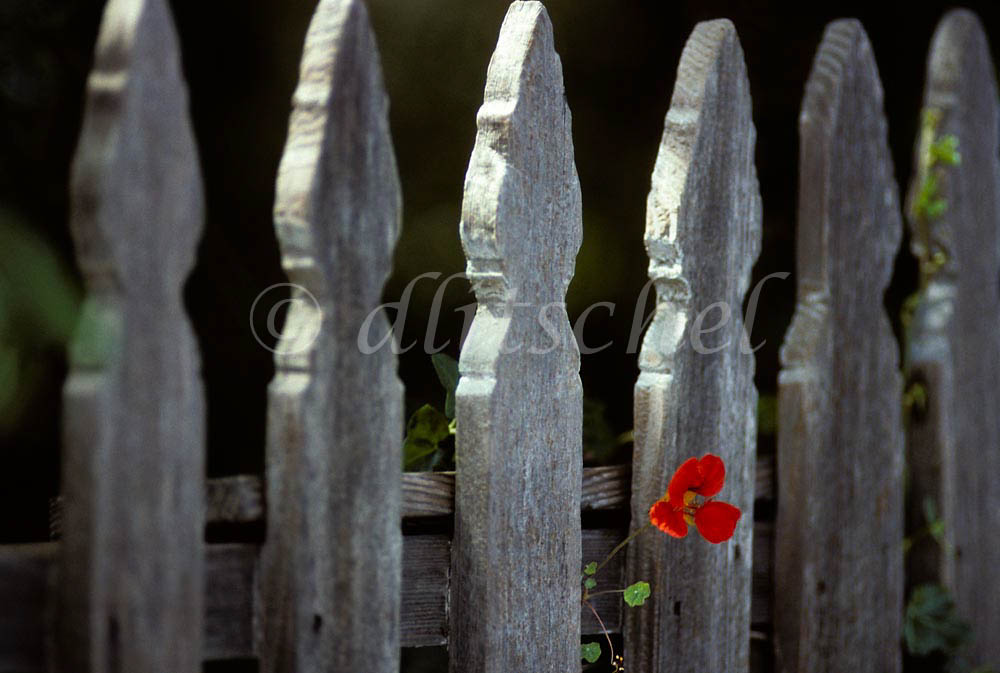 Decorative picket fence, Cambria, California.  To purchase this image, please go to my stock agency click here.
