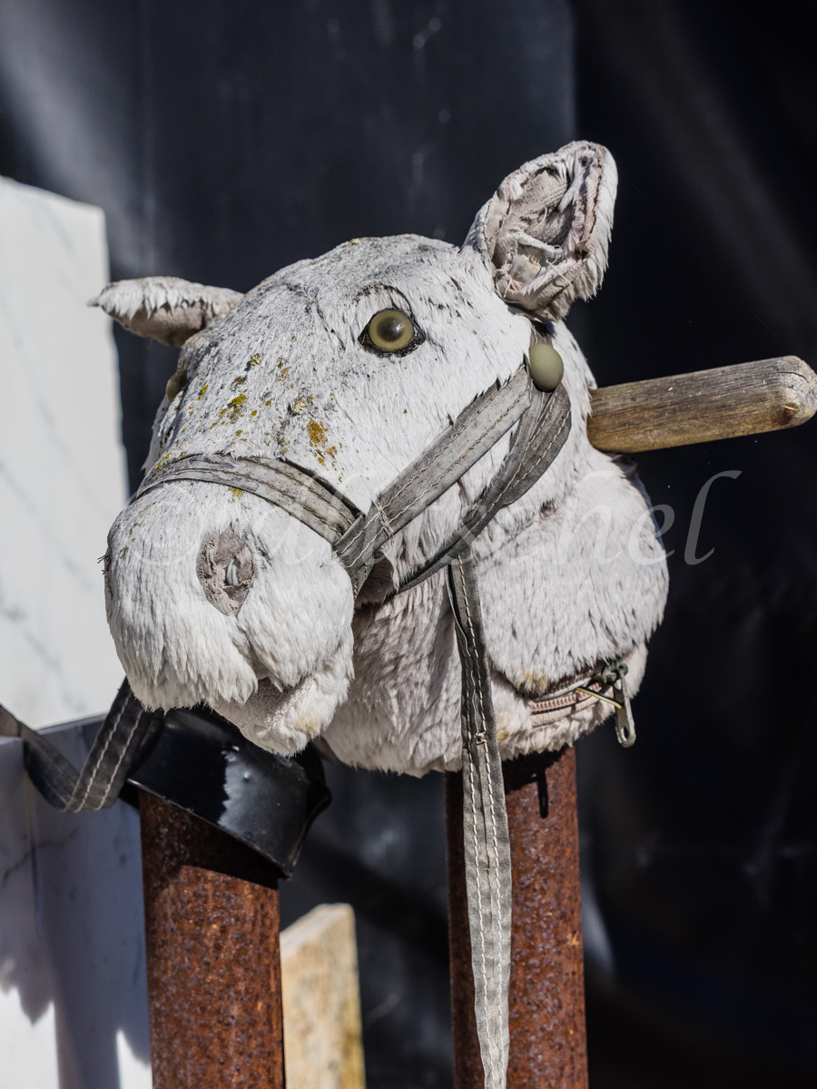 Old fashioned hobby horse head