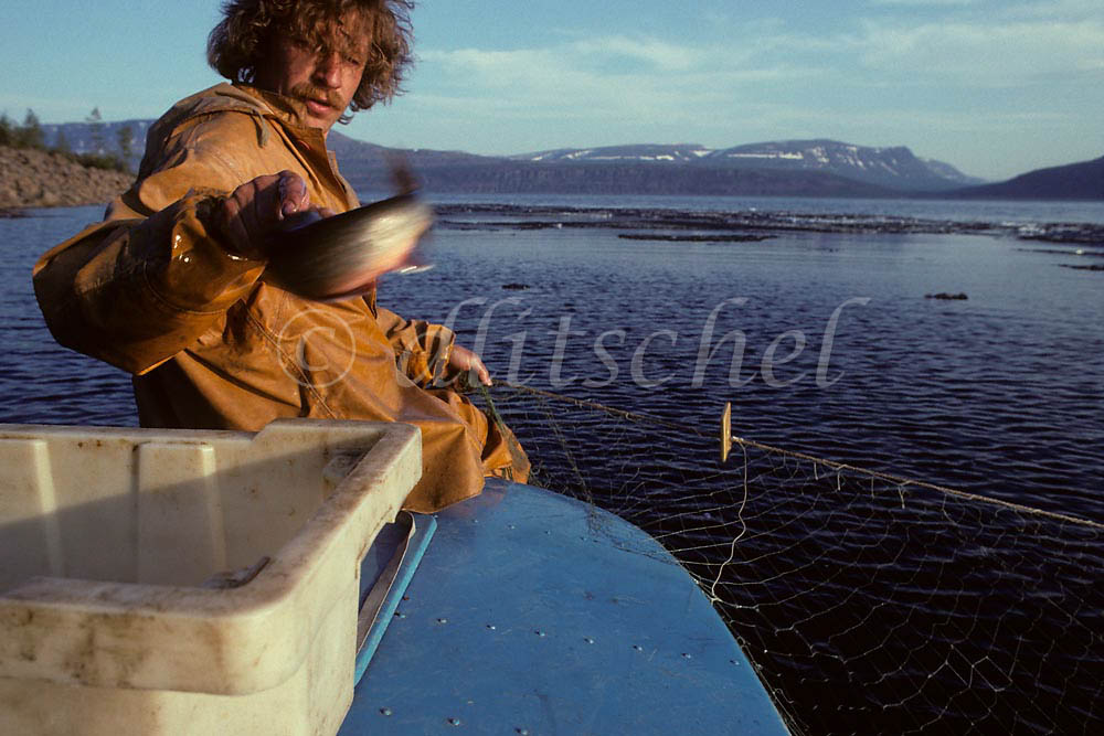 Russian fisherman on lake in Northern Siberia throwing caught fish into cooler on boat. To purchase this image, please go to my stock agency click here.