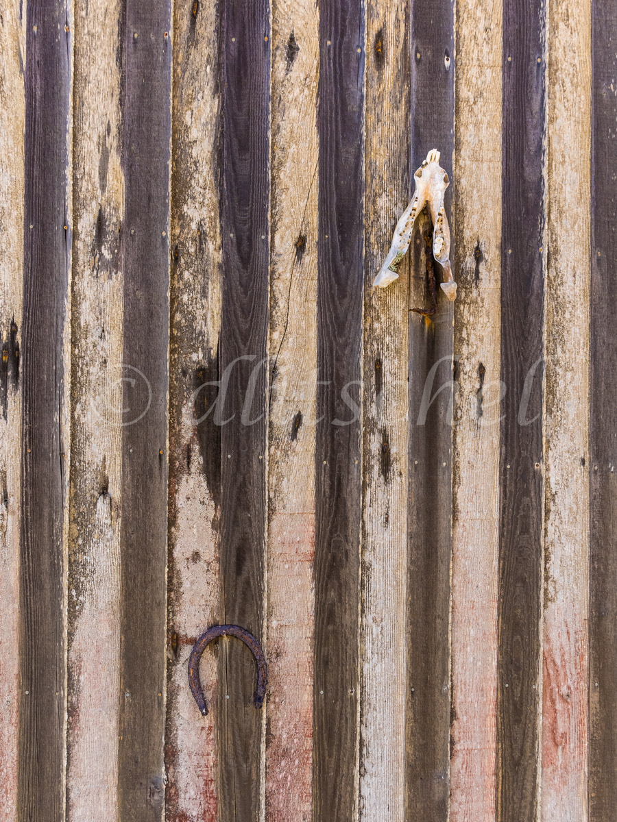 A small animal skull and a horseshoe nailed to a wooden wall made up of vertical slats, Santa Cruz Island. Santa Cruz Island is the largest of the eight islands in the Channel Islands of California.