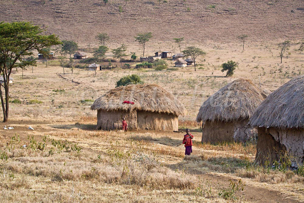 Masai village in the Sinya area of northern Tanzania. Huts are made of cow dung and mud with interwoven branches for internal support. The Masai women are responsible for the construction of the huts. To purchase this image, please go to my stock agency click here.