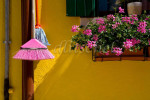 A pink bristled broom compliments the pink geraniums in a flowerbox against a vivid yellow wall in the colorful fishing village of Burano on Burano Island, Italy.To purchase this image, please go to my stock agency click here.