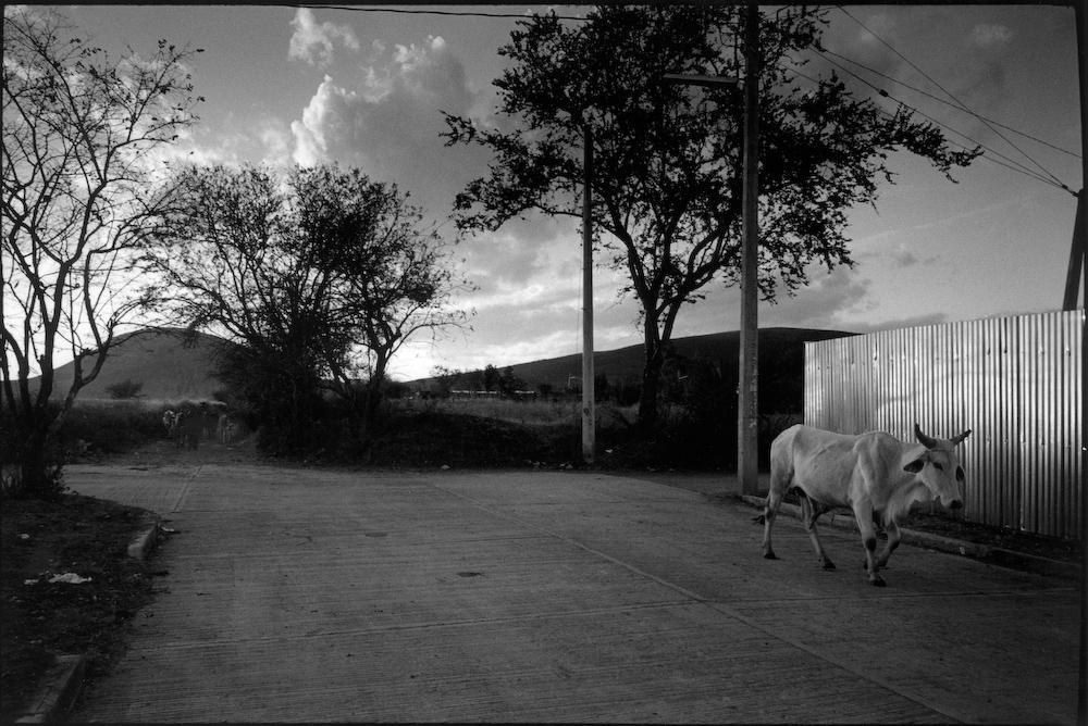 Oaxaca_2010-004