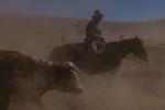 Western-Horseman-24