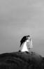 Ashley_and_Ben_Wedding_1607A