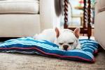 JILLBROUSSARD_PuppySleeping