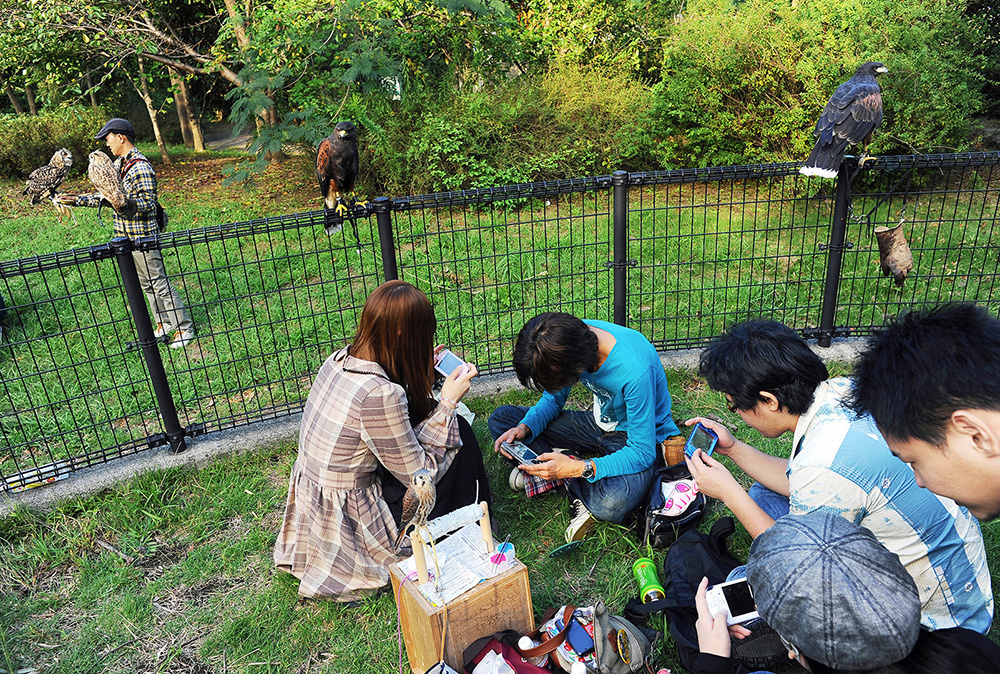 Owners of raptors are absorbed by play station games at Kiba Park. They often gather together at the park on the weekend to strength their bond of raptor love. 2011, Koto-ku, Tokyo, Japan.