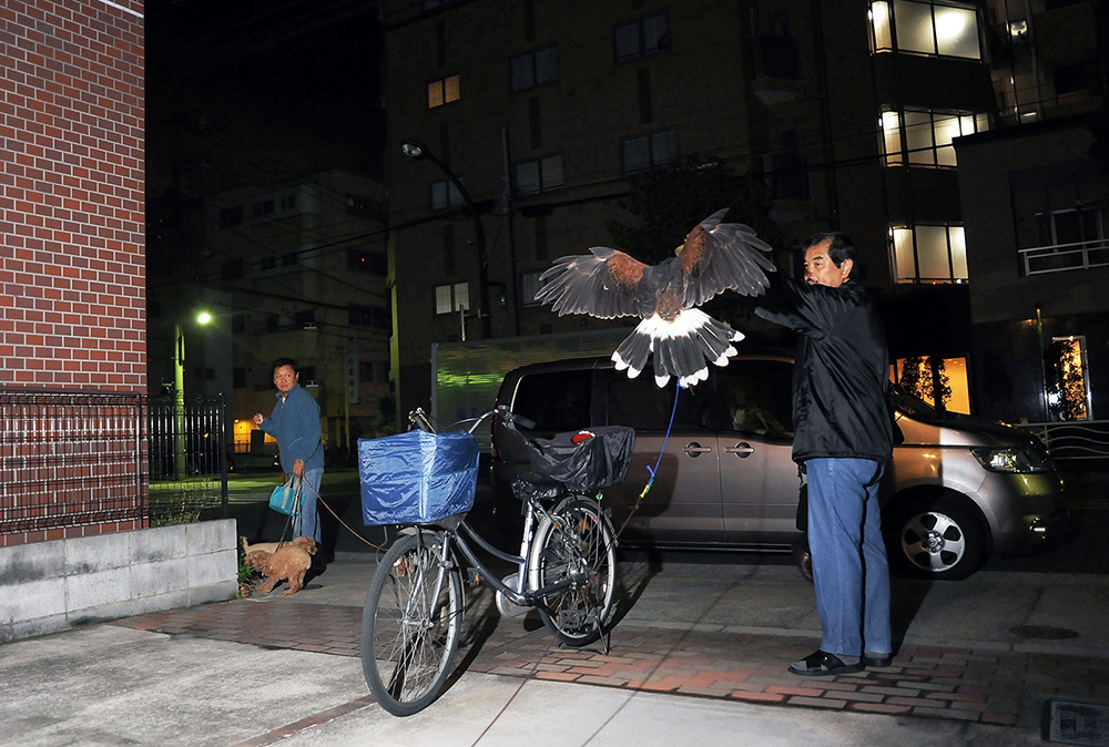 "Seiji Suzuki, 59, practices falconry with his pet Harris Hawk named ""Sora -Sky in Japanese"" in front of his house at night. Suzuki works for marketing company. Having exotic wild animals is his utmost dedication in his spare time. He also takes care of a fox, a badger, and three ferrets as pets in his house. 2011, Koto-ku, Tokyo, Japan."
