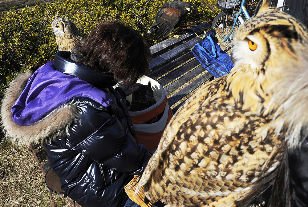 Takanori Suzuki, 25, adores his friend's owls at Kiba Park. He and his friends often gather together on the weekend to strength their bond of raptor love. 2013, Koto-ku, Tokyo, Japan.