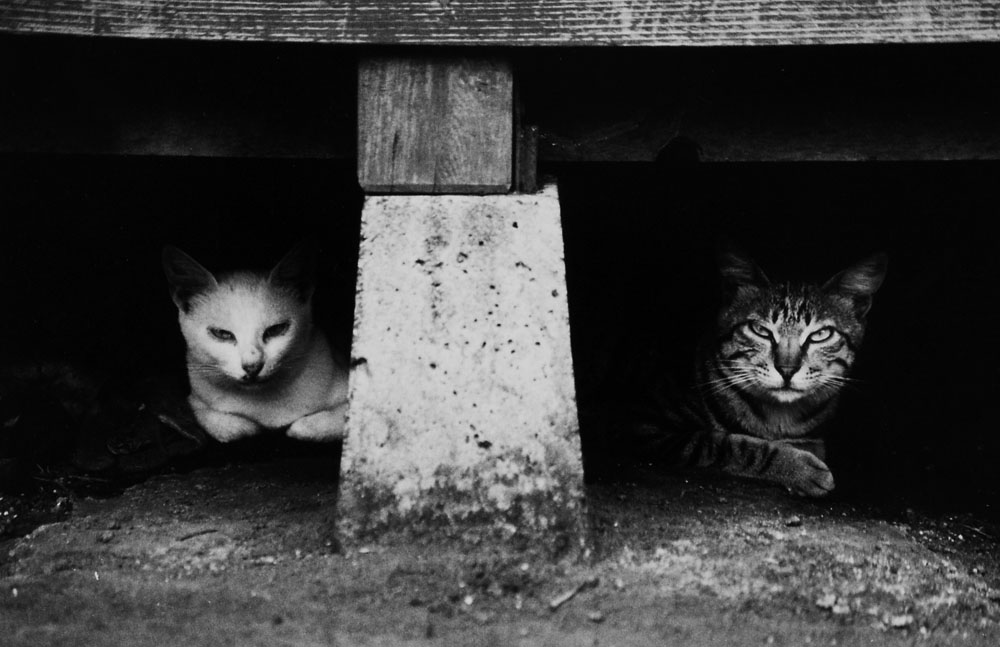 Wild cats under the eaves in Nakanogo district.