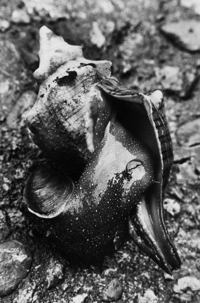 A live shellfish at Aigae beach.