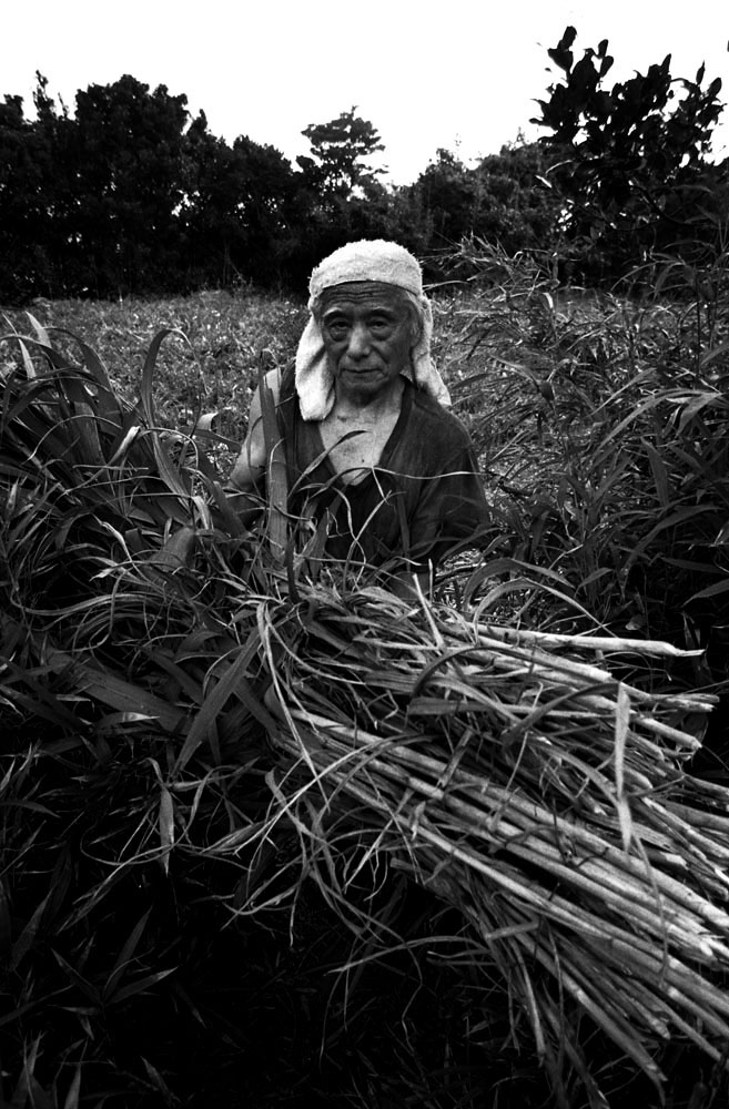 Manichi Yamashita,76, a dairy farmer,with fodder, Nakanogo district. His son, also a dairy farmer, committed suicide. {quote}I am taking care of his plot now,{quote}  he said.