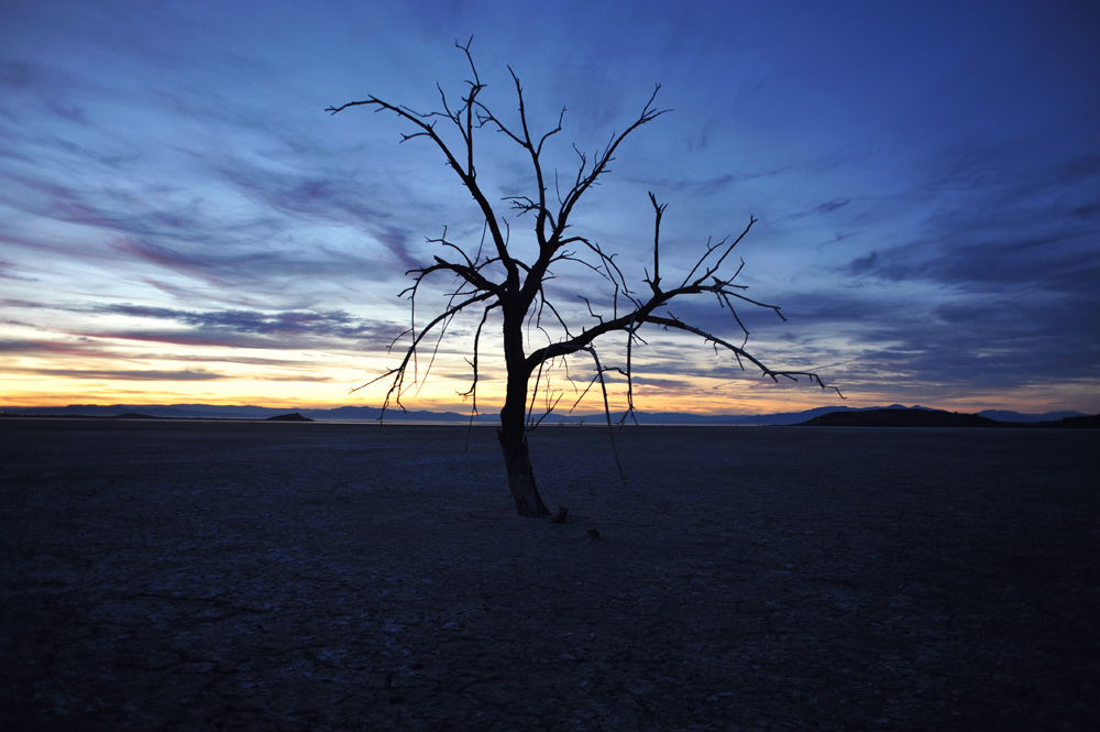 Dead Oak Tree at dusk, Sonny Bono Salton Sea National Wildlife Refuge,established as a national refuge in 1930 by a Presidential Proclamation. In 1998, it was renamed after Congressman Sonny Bono who played a major role in trying to save the Salton Sea's environment.