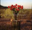 RosesCactus1
