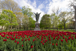 May 5, 2016; Tulips in full bloom in front of the Sacred Heart Jesus statue. (Photo by Barbara Johnston/University of Notre Dame)
